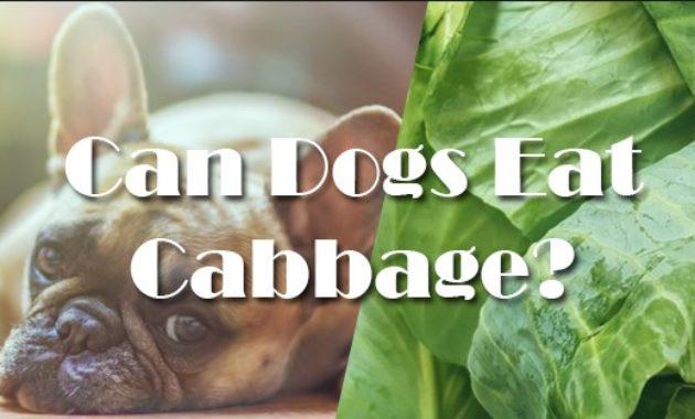 Can Dogs Eat Vegetables? Like Celery, Asparagus, Lettuce, Cabbage dan Kale?