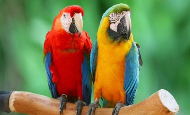 animals that start with m: Macaw