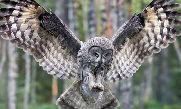 animals that start with o: Owl