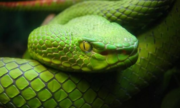 animals that start with s: Snake