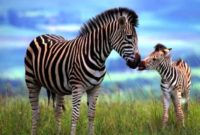 spectacular animals that start with z