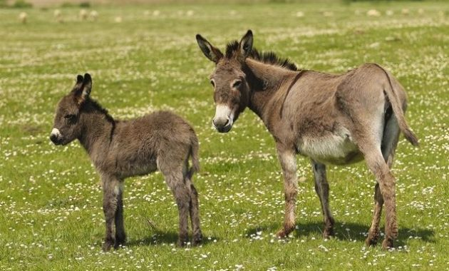 animals that start with D: donkey