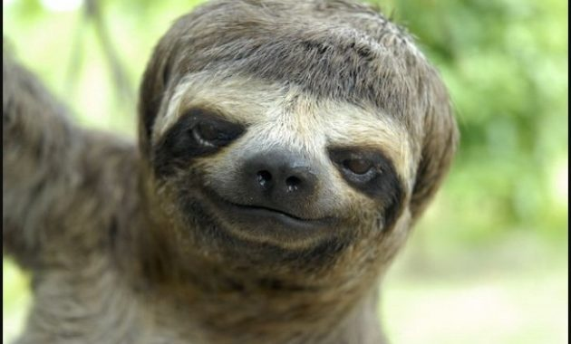 down syndrome animals sloth