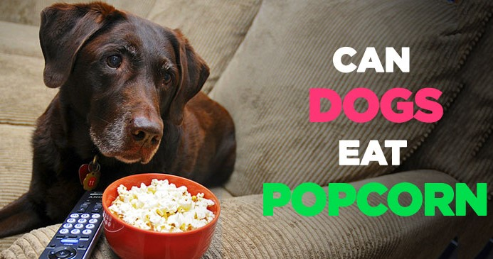 Can Dogs Eat Fast Food? Like Popcorn, Pasta, Bread and French fries?