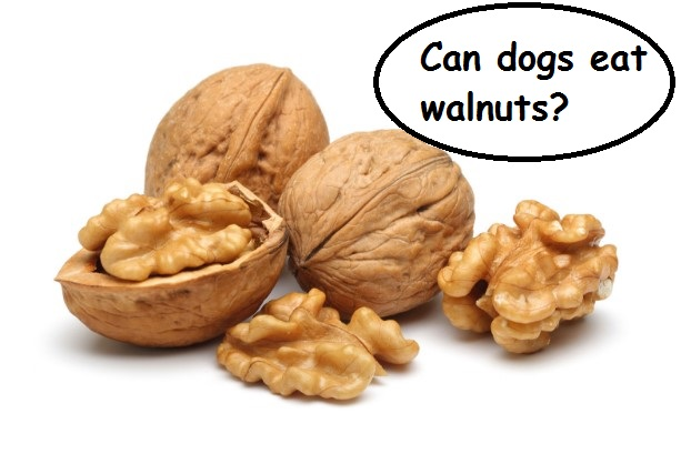 How To Keep Dogs From Eating Acorns