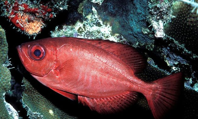 a list of beautiful animals with red colored : Glass Eye Squirrel Fish