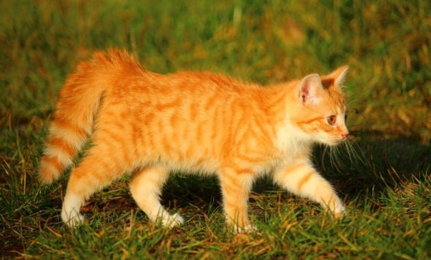 a list of beautiful animals with red colored : Red Tabby Cat