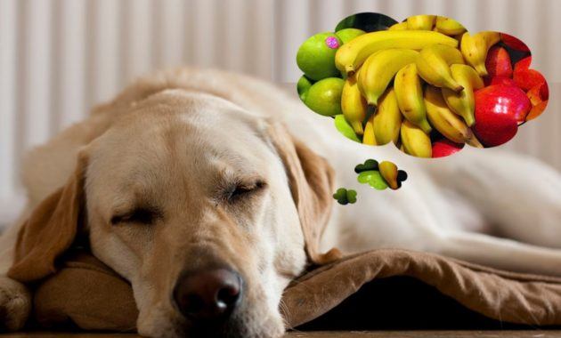 can dogs eat fruit