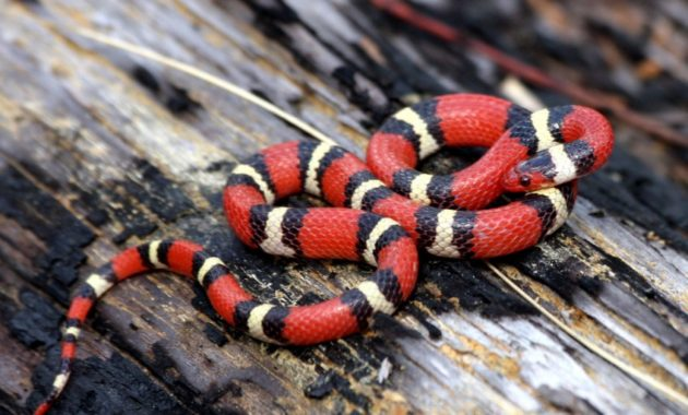 Here is long list of beautiful and colorful small snake