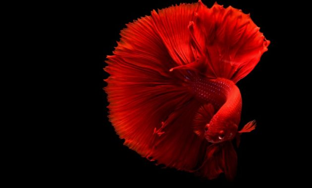 a list of beautiful animals with red colored