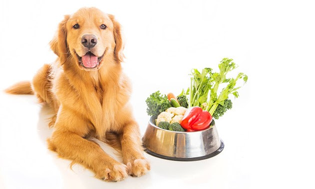 can dogs eat vegetables