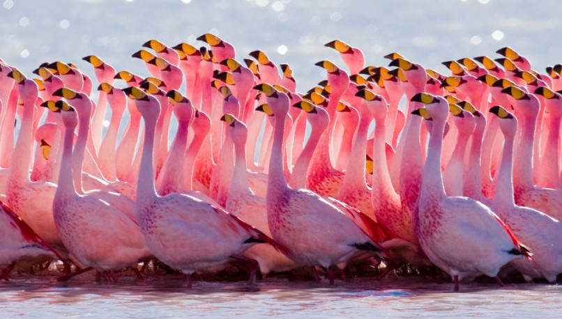 Here is 10 Beautiful Pink-colored Birds