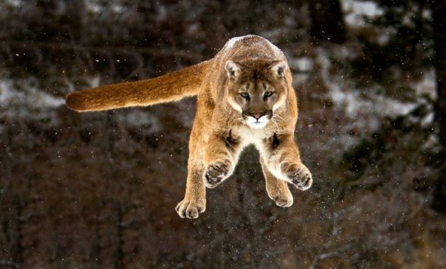 highest jumping animals in the world