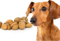 Can Dogs Eat Nuts? Like Almonds, Cashews, Pecans, Peanuts, Acorns And Walnuts?