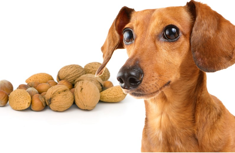Can Dog Almonds