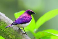 Here is long list of Beautiful Purple Colored-Birds That You Didn't Know It Before