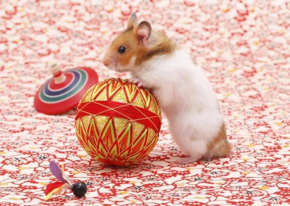 fact of syrian teddy bear hamster