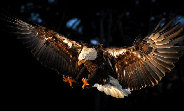 famous types of eagle in the world