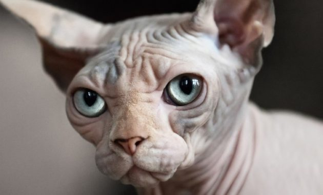 Here is long list of Bald and Hairless Animals You've Never Seen Before