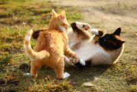 Are My Cats Fighting or Playing