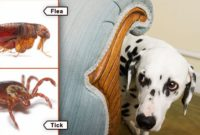 How to Rid Fleas or Ticks of Your Pets