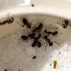 how to build ant traps