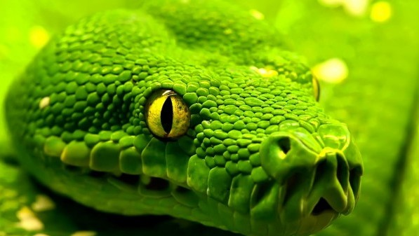 25 Amazing And Interesting Fact About Snake