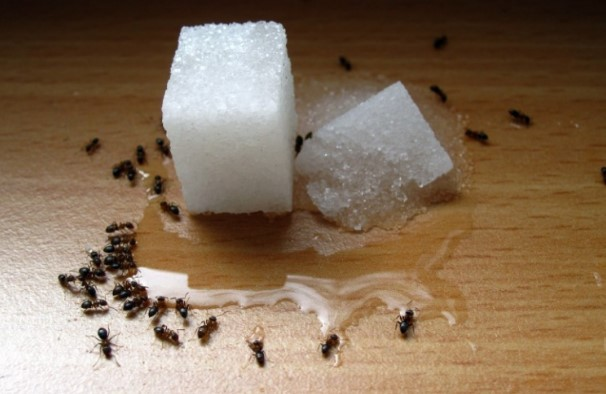 get rid of ants
