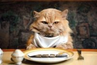 what do cats eat