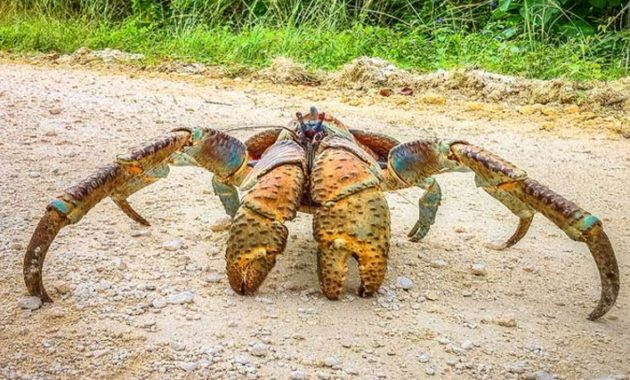 Different Types of Crab