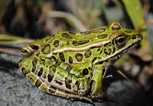 Different Type of frog