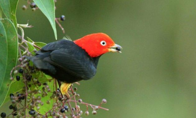 Best Dancer Birds in The World