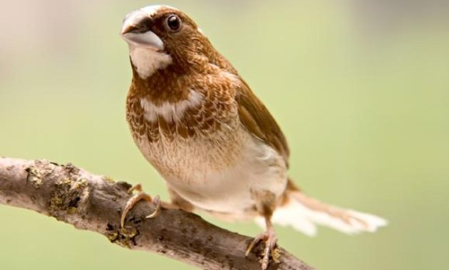 Different Types Of Finches