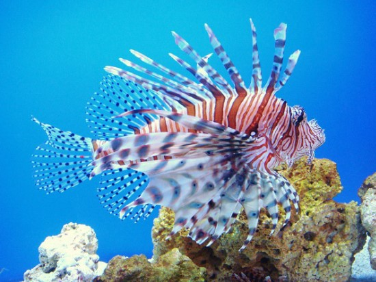 Top 10 Amazing Great Barrier Reef Animals
