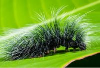 Different Types of Caterpillars