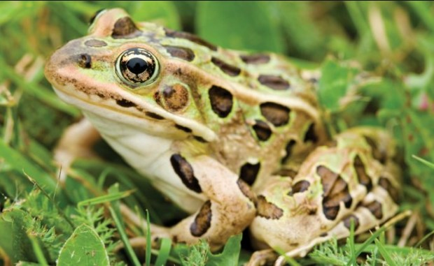 Top 7 Different Types of Frogs
