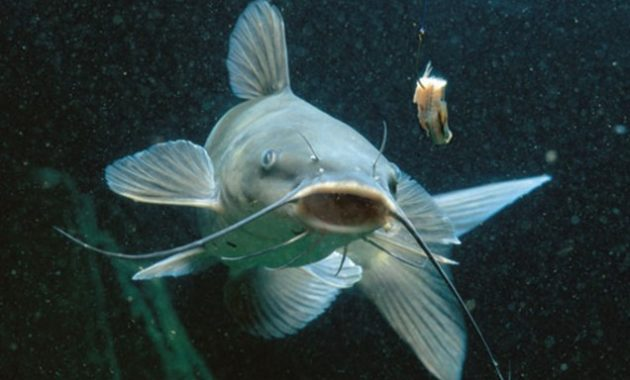 Interesting Catfish Facts You Might Not Know