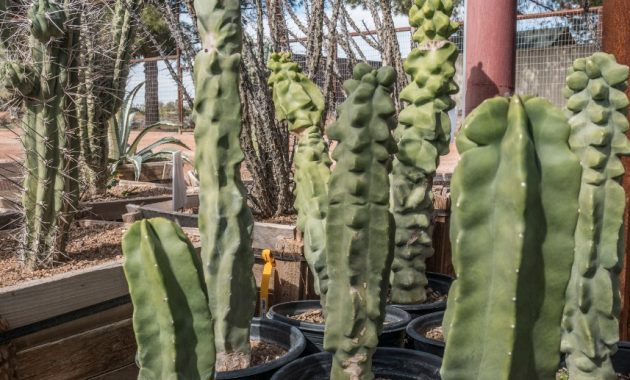 Different Types of Cacti To Grow at Home