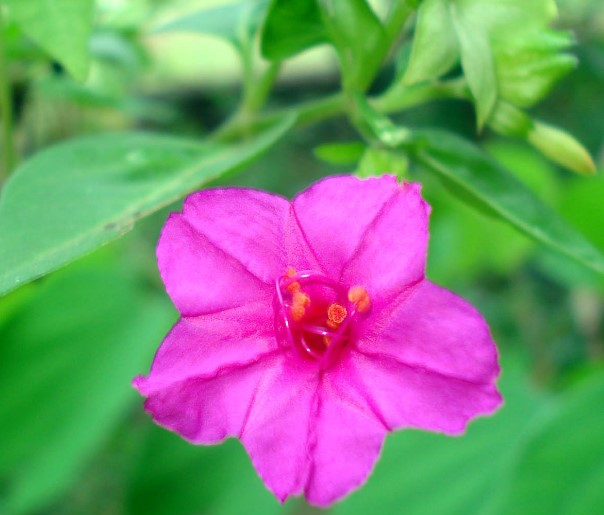 Beautiful Paink Flowers for Your Garden