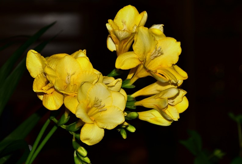 Most Yellow Flowers in The World (Meaning, Seasonal, And Occasions)