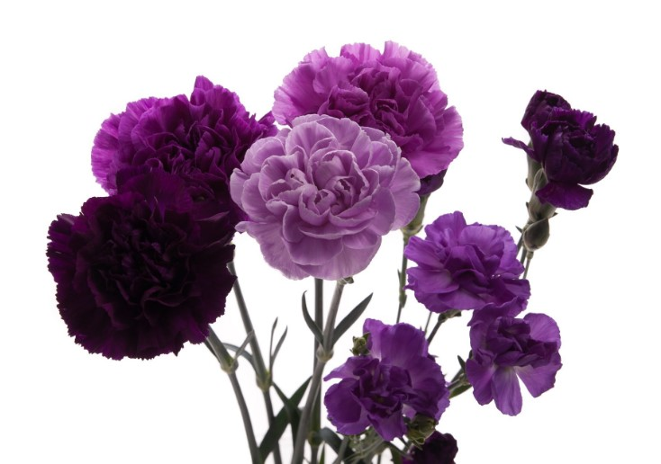 Different Types of Purple Flowers + Meaning