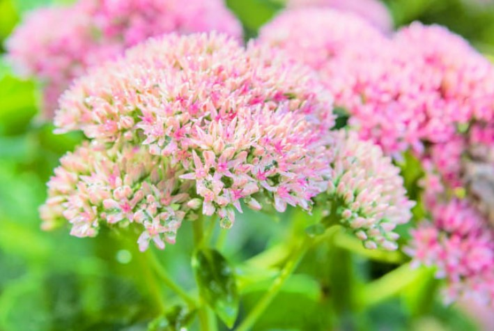 Beautiful Pink Flowers for Your Garden