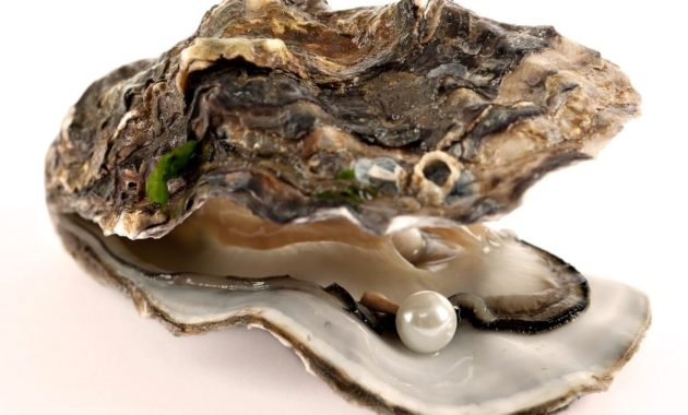 animals that start with o: Oyster