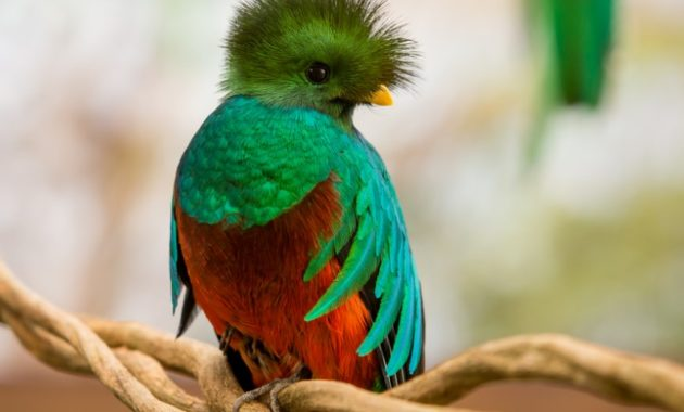 animals that start with Q: Quetzal