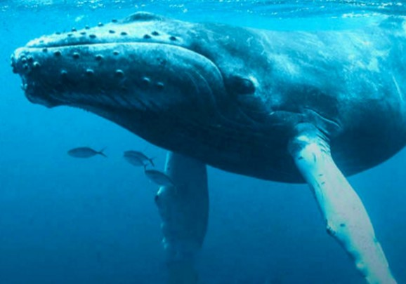 Animals That Start with W: Whale