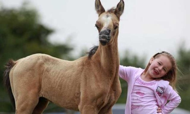 down syndrome animals horse