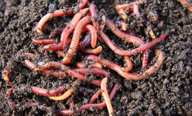 animals that start with e: earthworm