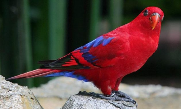 a list of beautiful animals with red colored : Red Lory