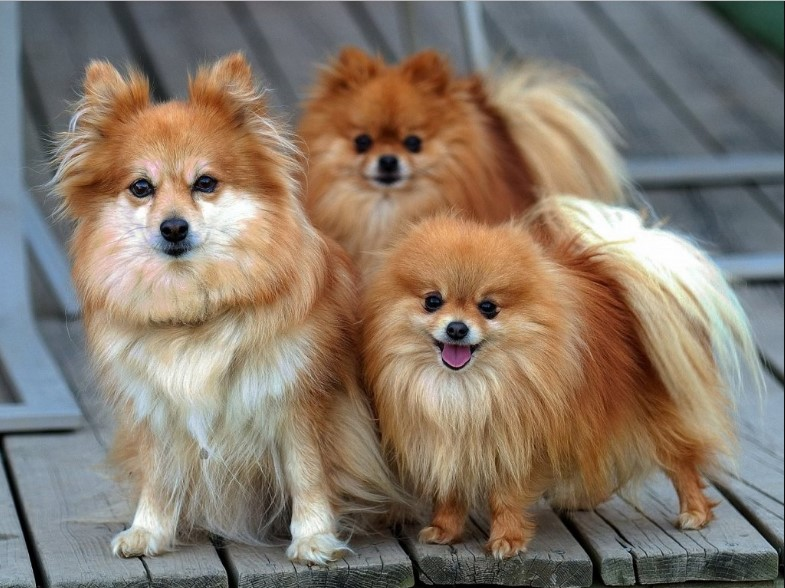 Here long list of most beautiful dog breeds in the world