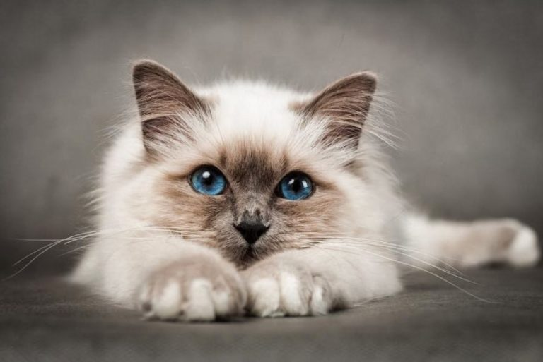 14 Most Amazingly Beautiful Cat Breeds in the World